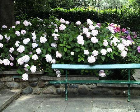 Anna regge giardino in ombra a torino - Giardino in ombra ...