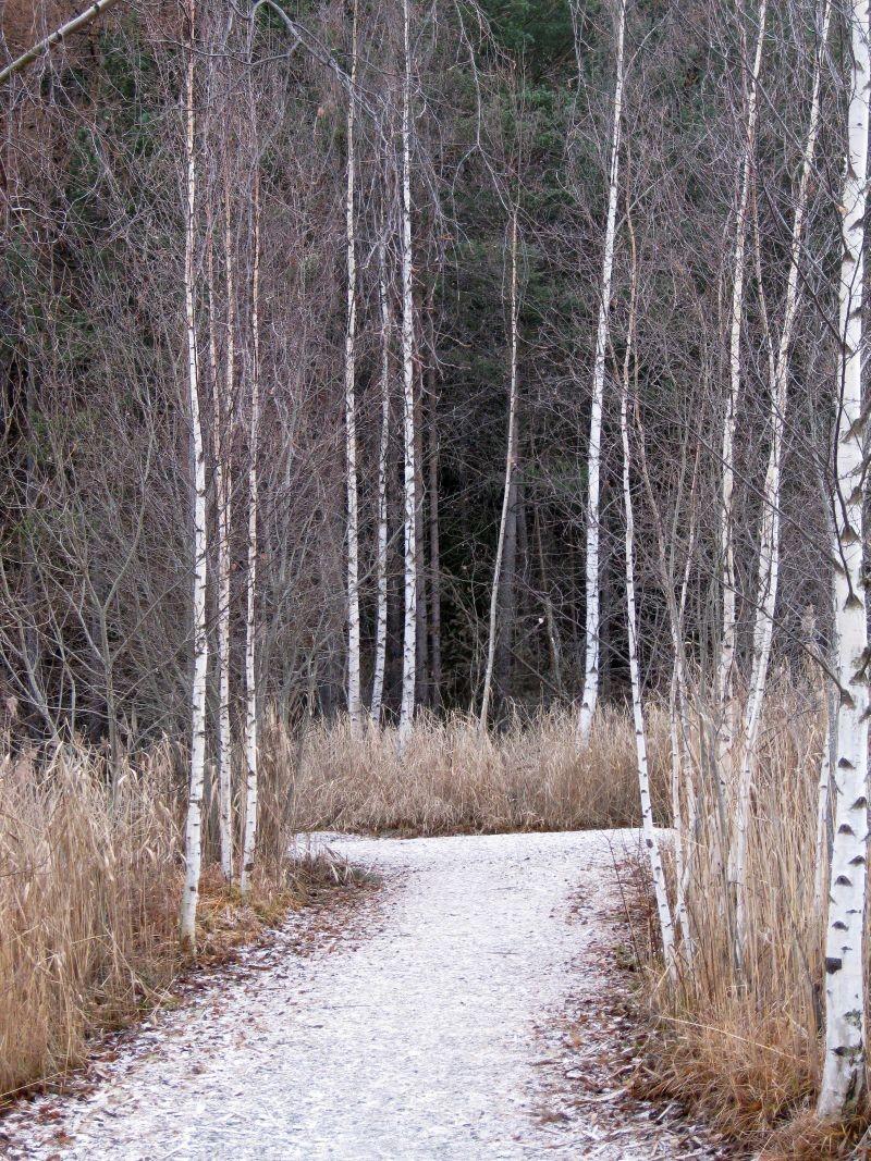 Anna regge la riserva naturale dello stagno di oulx for Ecosistema dello stagno